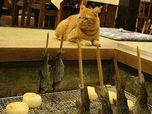 夕食にお出しする「ニジマスの塩焼き」「焼きオニギリ」と看板ネコのチャッピーさん