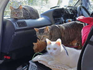 うちの看板ねこたちは、ドライブが大好き。みんなで九州に行ったときの一枚。