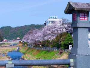 春うらら!清流桜満開♪