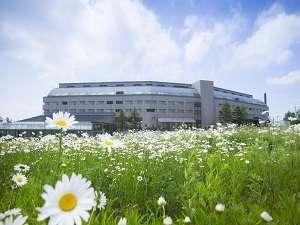 【春】グリーンシーズンのゲレンデには花が咲き乱れ気持ちのいいフィールドに変わります