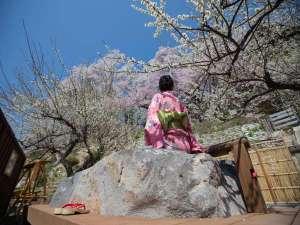 【御殿守歳時記】4月の花見の足湯は穏やかな日差しと色とりどりの花々。春がギュッと詰まってます♪