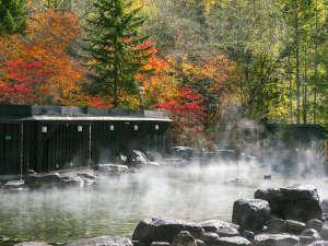 【大露天風呂HOSHI★ZORA】湯けむりの向こうに広がる奥ゆかしく色づいた初秋の紅葉。