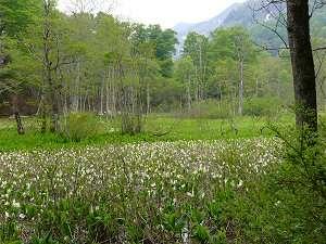 奥信濃では初夏の香りがただよい始め、目に染入る新緑眩しい季節.. やがて、さわやかな夏へと