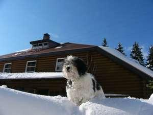 雪の中の愛犬ミトン