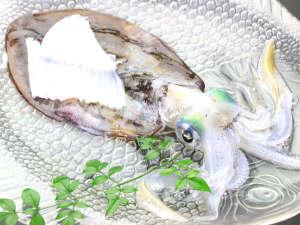 イカの姿づくりのお刺身