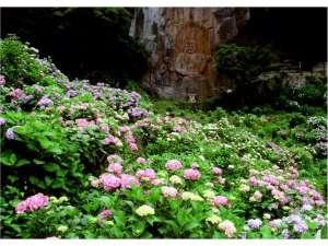 普光寺磨崖仏とあじさい 見頃6月下旬~7月上旬