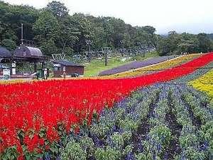 ラベンダー畑&夏山リフト