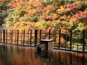 【女性露天風呂】鮮やかな紅葉が湯面に映える。時間を忘れて湯に癒されて。