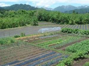 無農薬有機やさいの畑