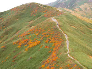 *【月山・秋】鮮やかに紅葉し、錦秋に染めていきます。