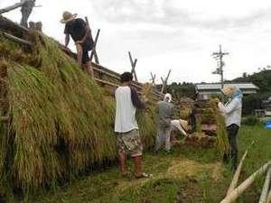但馬屋のおいしいお米は、天日乾燥で丹精こめて作ったハデ干し米です