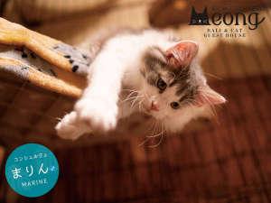 猫と過ごすバリ風民宿Meong楽宿白浜店 image