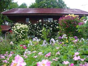 およそ400坪の庭、年3回のオープンガーデン、花苗の販売も行っている。、
