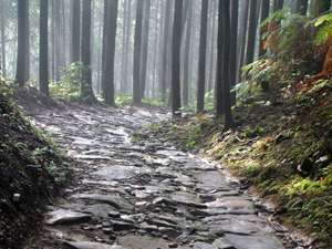 世界遺産【熊野古道】を歩き歴史を体感