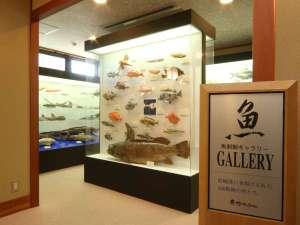 当館1階の魚剥製ギャラリーです。