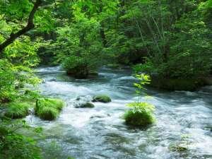 【奥入瀬渓流】美しい渓流が三つに別れまた出会う三乱の流れ 4/21~「渓流ガイドウォーク」開催