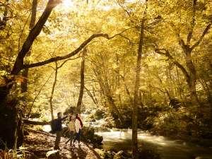 【早朝紅葉ガイドツアー】静寂の早朝に、エリアを熟知しているからこそわかる紅葉スポットへご案内します。