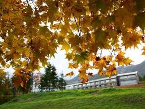 紅葉の時期は色づく木々に包まれます。