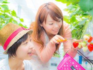 【いちご狩り】ホテルから車で3分のいちご村。子供のこぶし大の苺が鈴なりです!