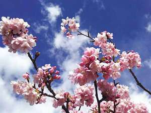 今井浜温泉 大人の隠れ宿 花の風の画像