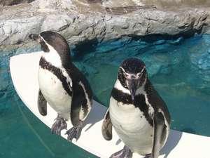 かわいいフンボルトペンギンがお出迎え♪