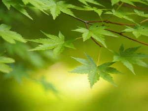 穏やかな気候と青もみじが彩る新緑の京都へお越しください♪