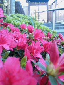 ツツジや桜が静かに咲いた玄関です。
