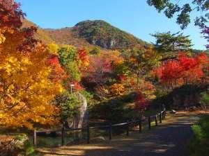 【紅葉山公園】佐渡を代表する紅葉の名所。(ホテルより車で約50分)