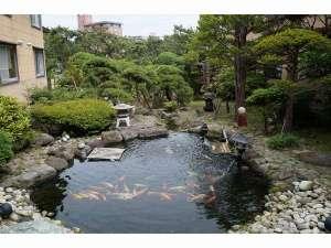 日本庭園 玄関入ってすぐ、窓越しに広がる庭園。中央にある池には鯉が優雅に泳いでおります。