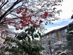 11月19日函館は初の積雪です。とうとう冬の到来ですが、庭園は残った紅葉に雪と風情があります。