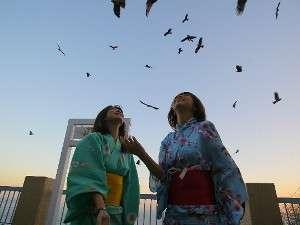 絶景リゾート  石鏡第一ホテル 神倶良:トンビ餌付け風景【毎朝7:10~参加者全員にオリジナル記念バッジ付き】