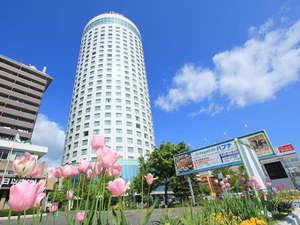 彩り鮮やかな花々が楽しめる札幌。
