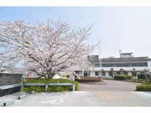 当館正面の桜と本館になります。春は正面と敷地内の桜が綺麗で写真を撮られる方が多いところになります。