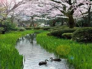 ◆兼六園まで徒歩5分◆お花見の季節は兼六園散策がお勧めです♪(4月上旬イメージ)