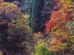 *紅葉が美しい真瀬渓谷