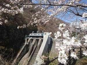 2021年4月7日現在 猿ヶ京温泉相俣ダ赤谷湖周辺桜見頃