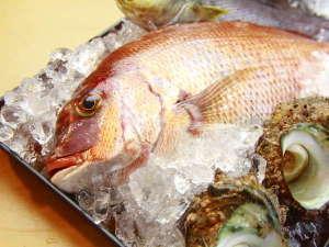 師崎港で水揚げされた鮮度抜群の魚介の素材を活かした料理を味わえます!