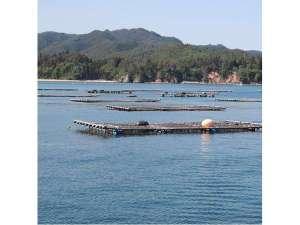 当館直営養殖筏