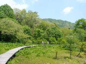 但馬高原植物園湿地ボードウォーク