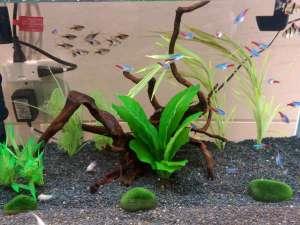 4種類の熱帯魚をご鑑賞頂けます!