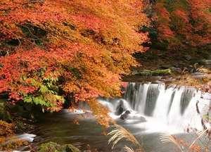 宿の正面を流れる『藤木川』の紅葉!お散歩しながらお楽めます。11月中旬から12月初旬が見ごろ