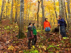 *秋の白神山地/世界遺産の歴史・魅力を存分に味わっていただく為、ガイド付き
