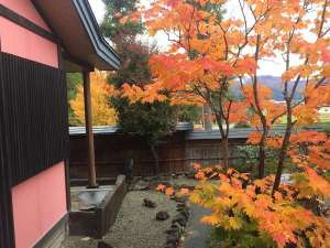 庭の楓紅葉