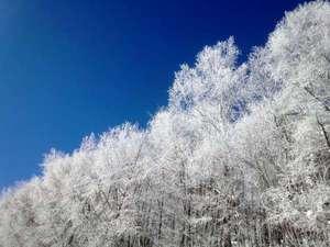 厳寒に自然の芸術 霧氷
