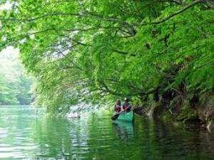 新緑のカヌー体験