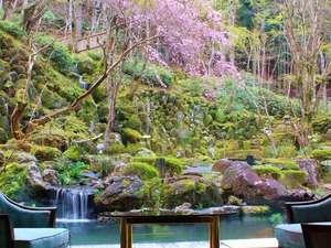 宙SORAの人気しだれ桜が春の訪れを知らせてくれます。例年4月上旬に開花する。(イメージ)