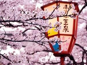 桜 ※写真は昨年玉湯川沿い満開時撮影。