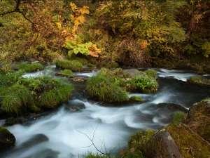 蓼科温泉ホテル親湯周辺は、散策できるスポットも多く、紅葉と自然美を楽しむ事ができます。