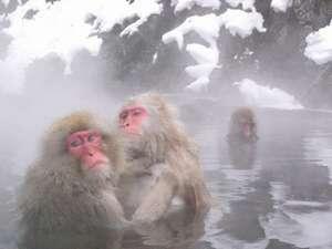 今や世界が注目 地獄谷野猿公苑Snow Monkey