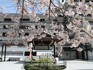 当館前の桜 ※例年4月上旬が見頃です